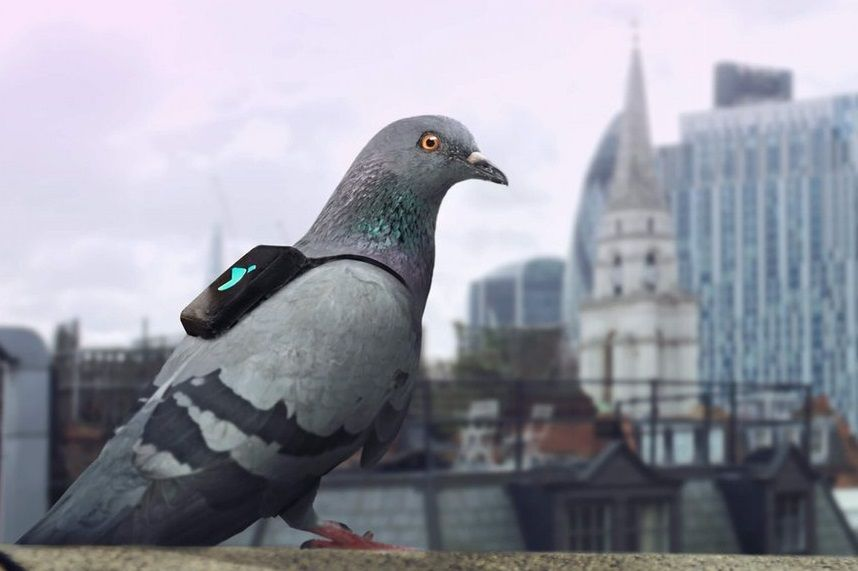 pigeon pollution london air environment sensor
