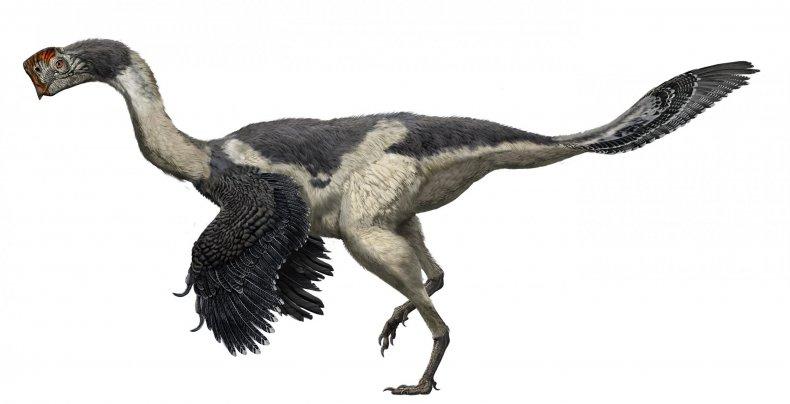 Citipati-dinosaur