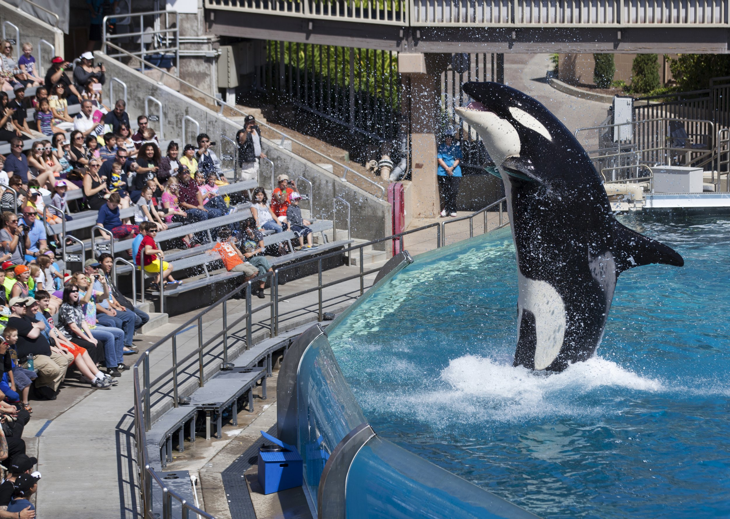seaworld_orca_breeding_program_0317