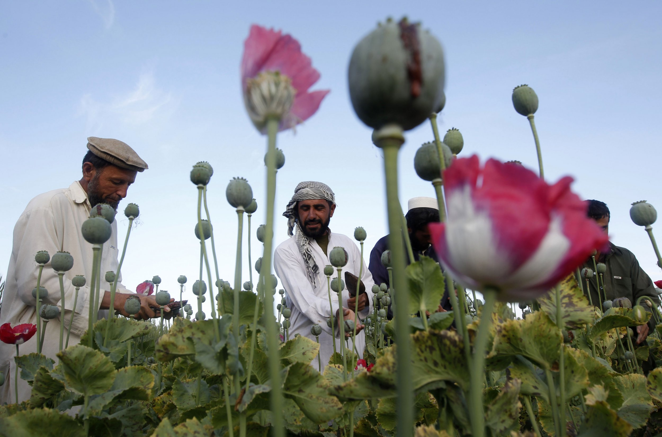 03_27_Afghan_Heroin_01