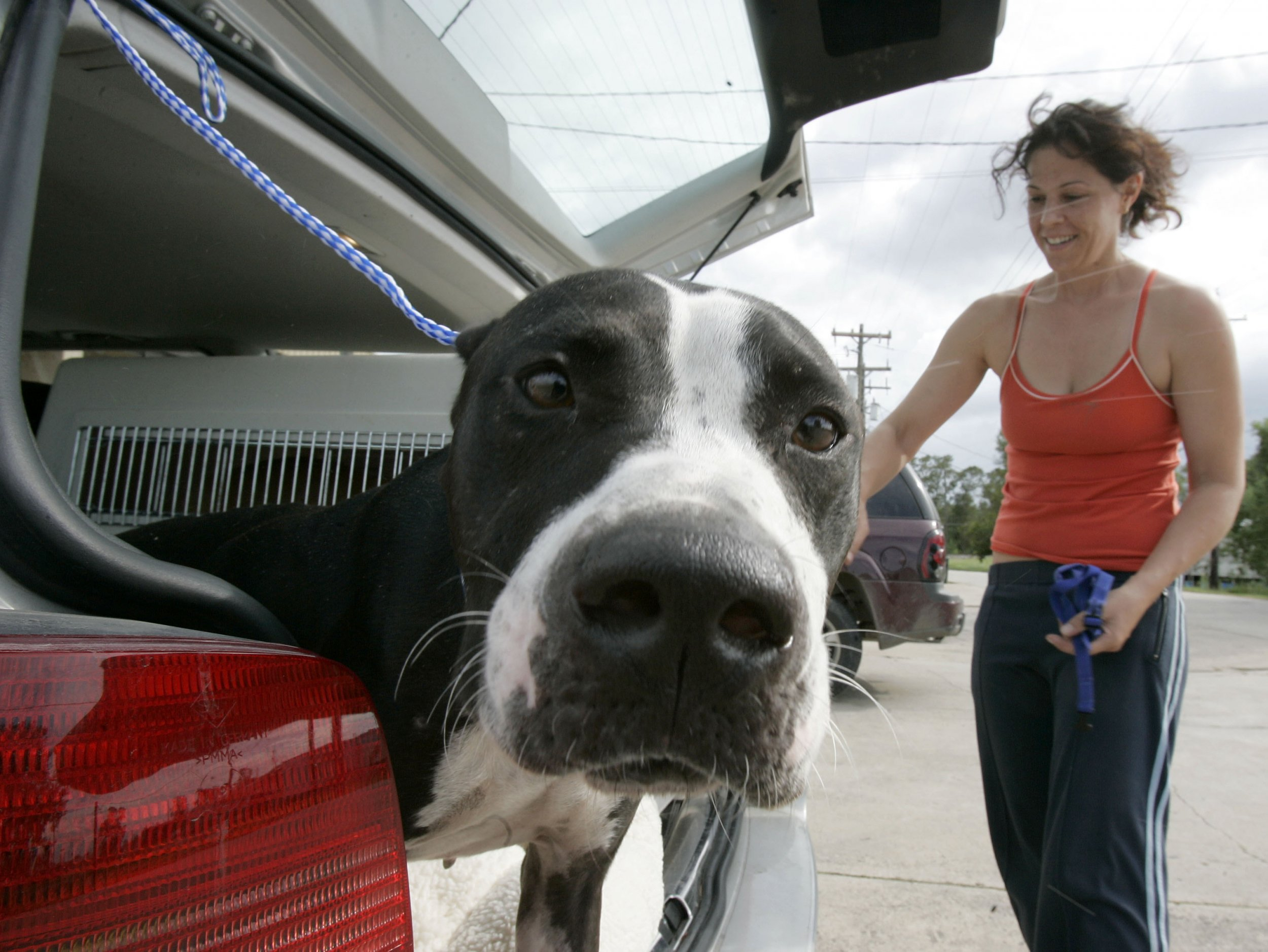 an analysis of pit problems in dogs For decades dog lovers have read headline after headline positioning one   what we do know from statistical analysis is that 868 percent of american pit bull   are the problem yet the only solution that gets implemented is banning the  dog.