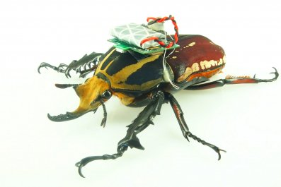 cyborg beetle computer NTU singapore