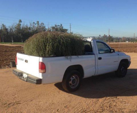 tumbleweed-truck