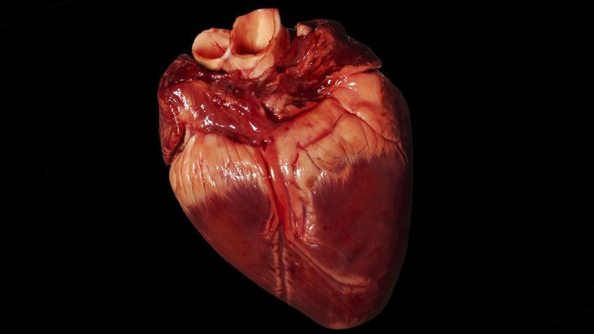 Image Of Pig Heart
