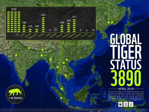 global tiger status infographic - april 2016