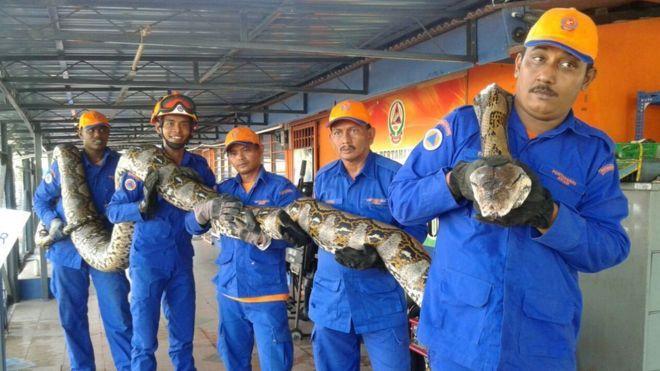 World Record Biggest Snake | www.imgkid.com - The Image ...