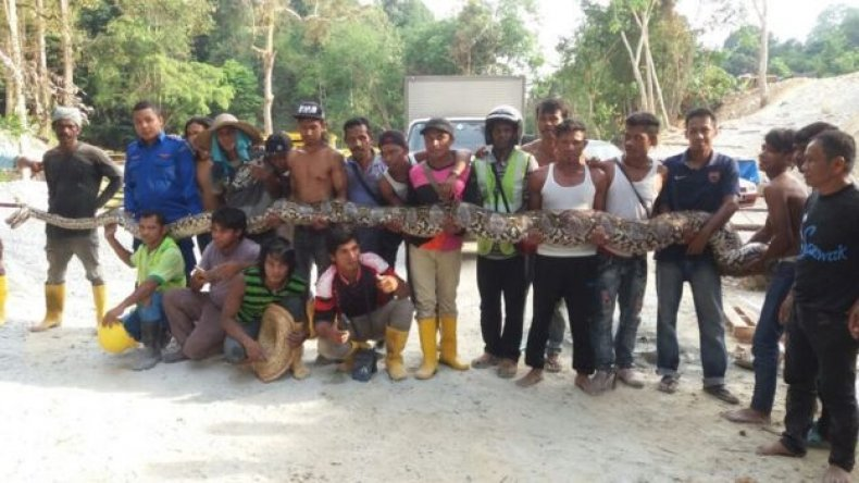 longest-snake-2