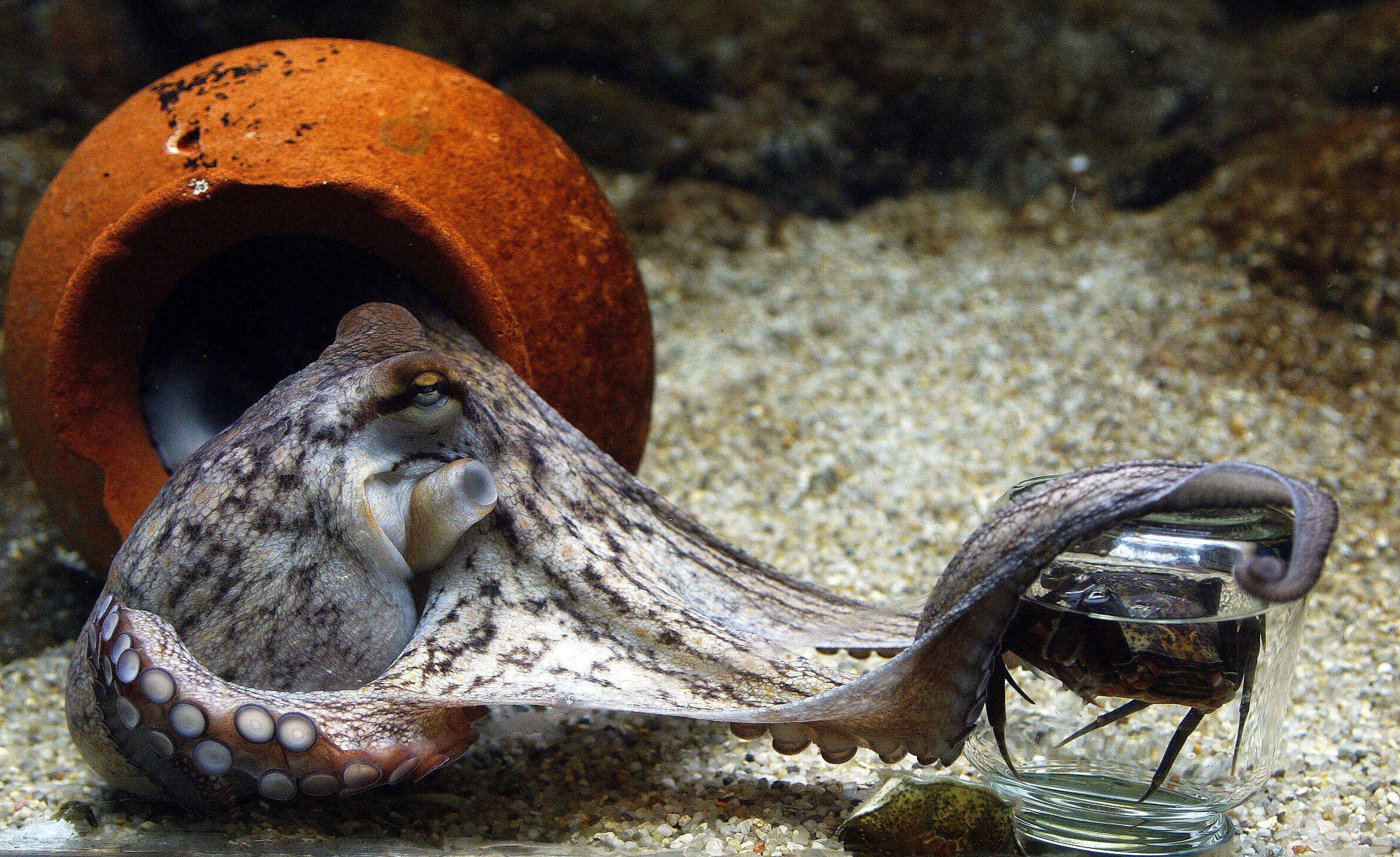 04_14_Smart_Octopus_01
