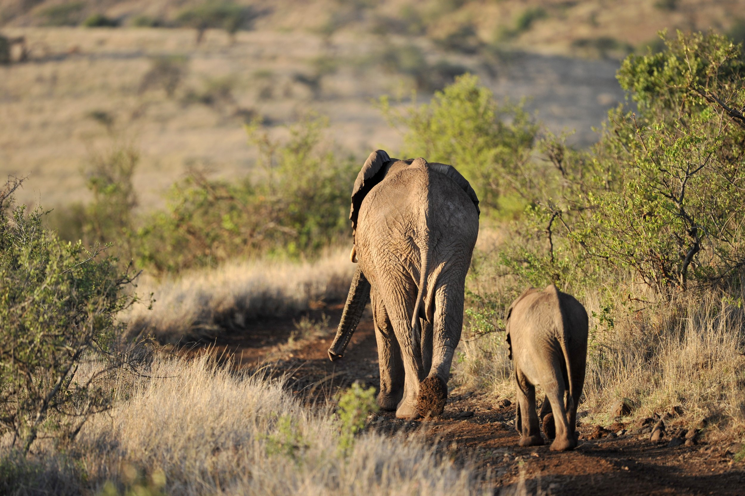 An elephant and her cub at the Lewa Wildlife Conservancy, Kenya.