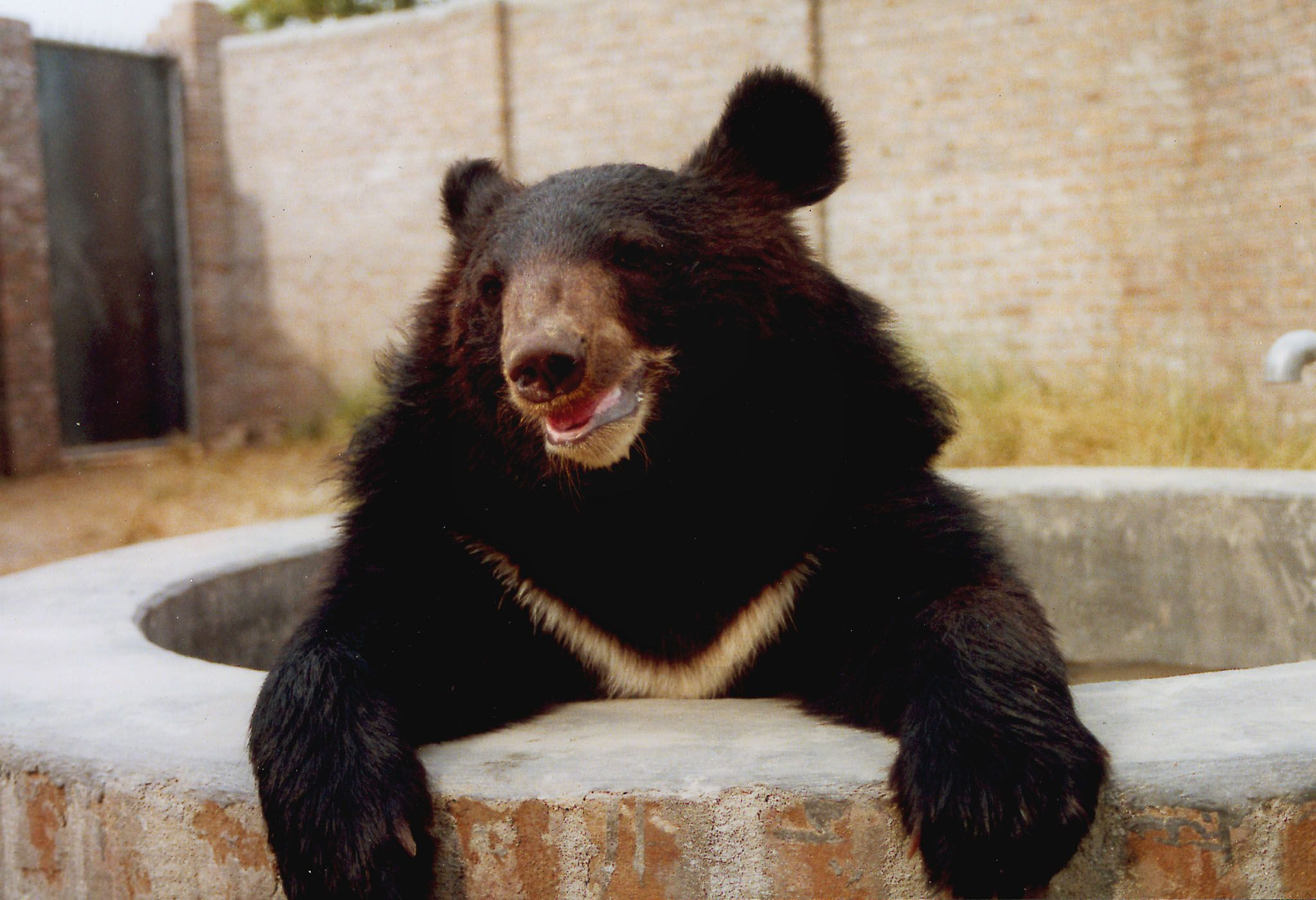 04_24_Bear_Baiting_01