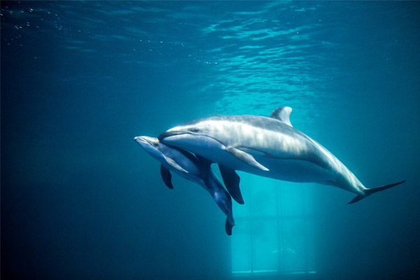 dolphin-and-baby