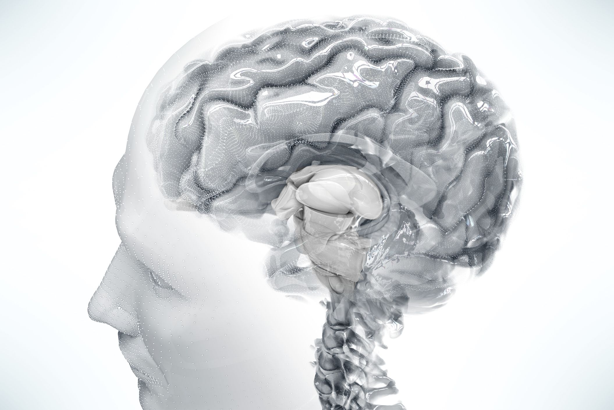 If Genes Dont Turn Off Brains Wiring >> Brain Cartography Modern Day Explorers Are Mapping The