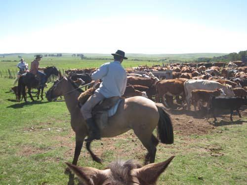 uruguayan-meat-industry