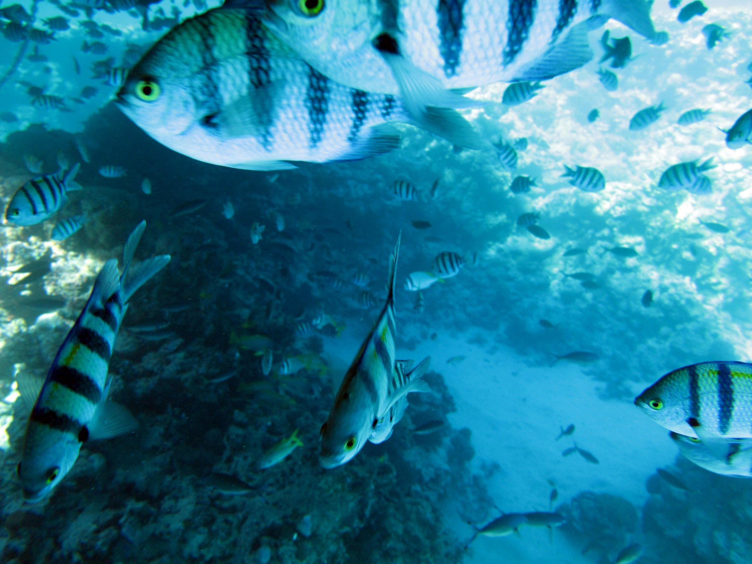 04_29_pacific-ocean-deoxygenation