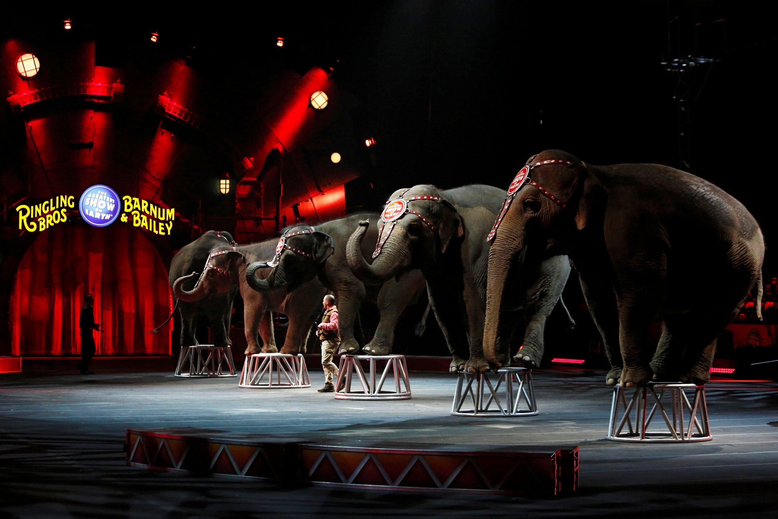 04_30_elephants_01