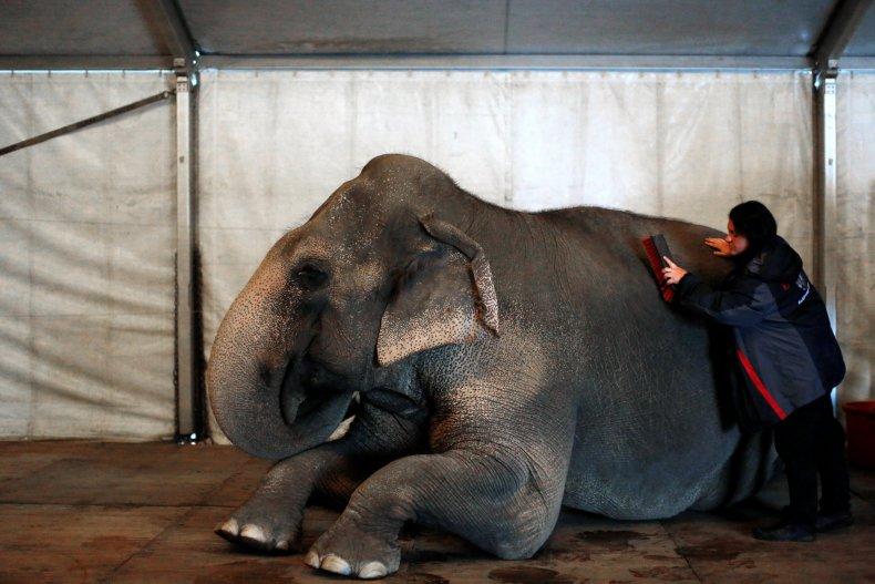 04_30_elephants_02