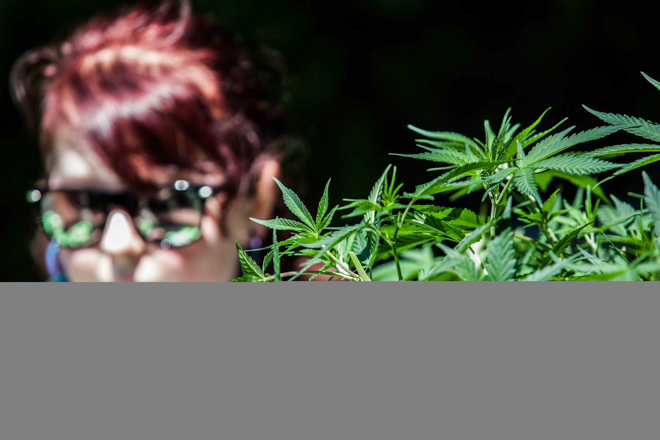 0501_Cannabisgrow_Ross