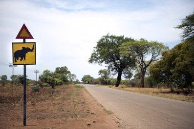 Zimbabwe elephant crossing in Hwange National Park