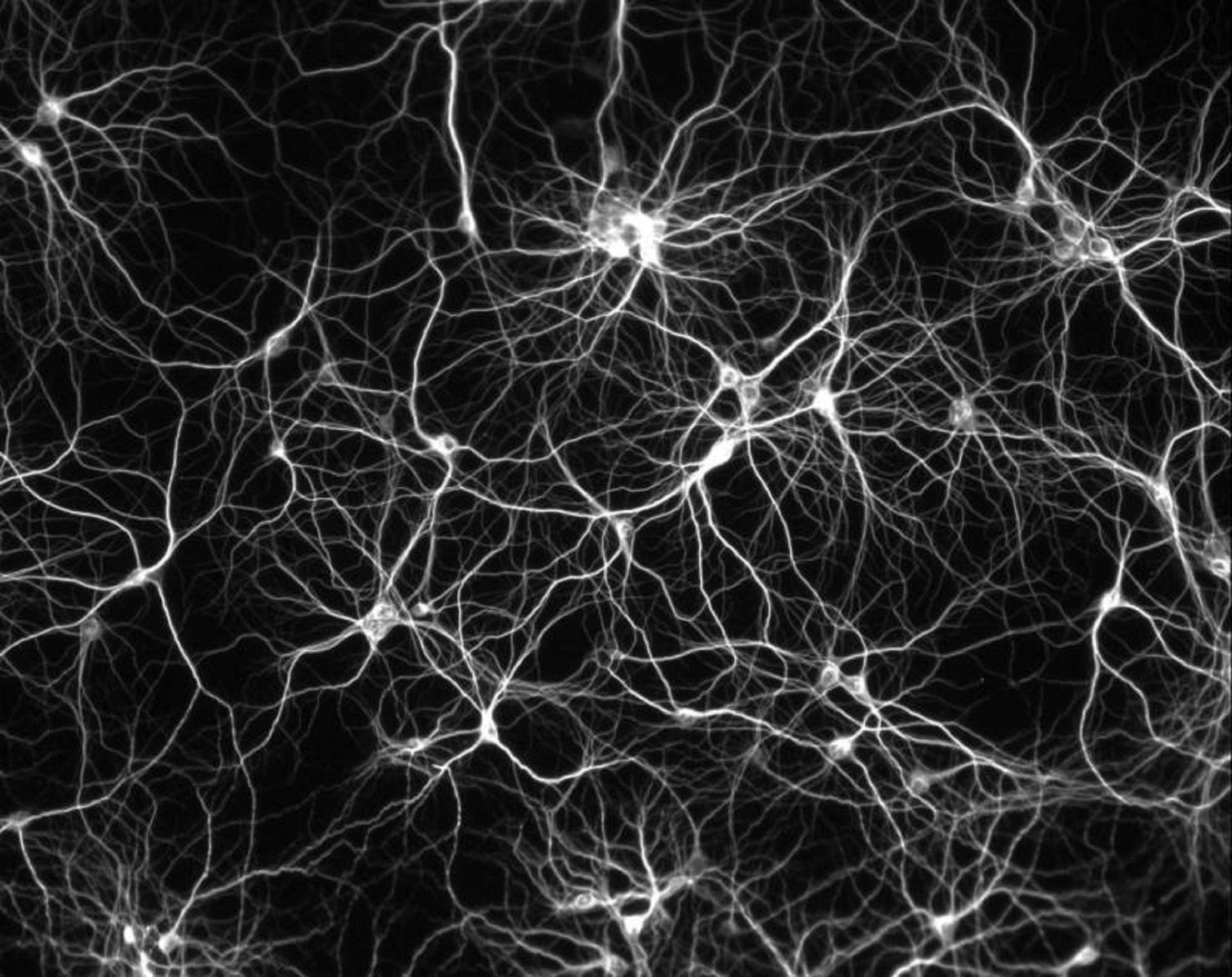 memory manipulation mice neuron brain