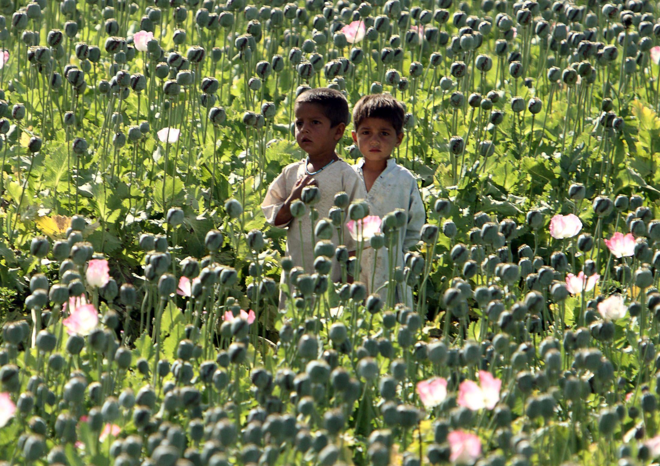 05_08_Afghan_Drug_01