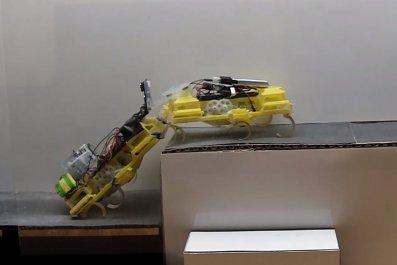 robots VelociRoACH cockroach insect robotics