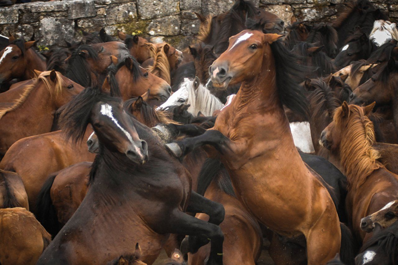 eckhoff-nb1009-horsemeat-main-tease