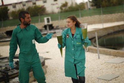 Algal biofuel workers