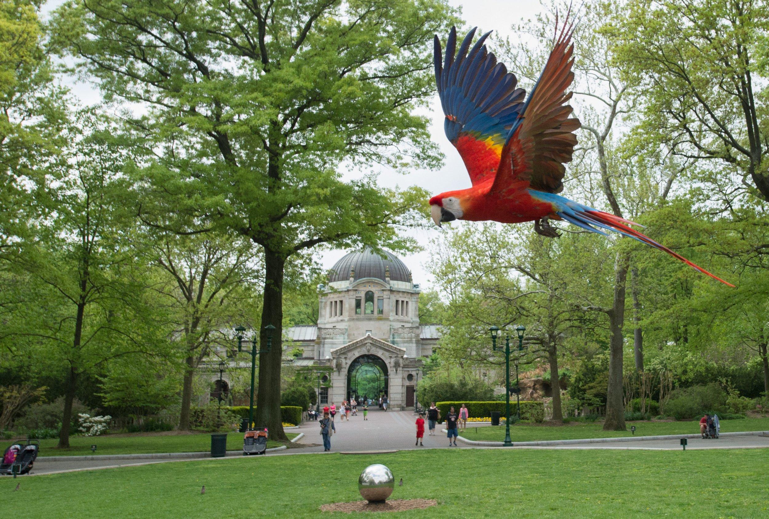 Bronx Zoo Scarlet Macaw