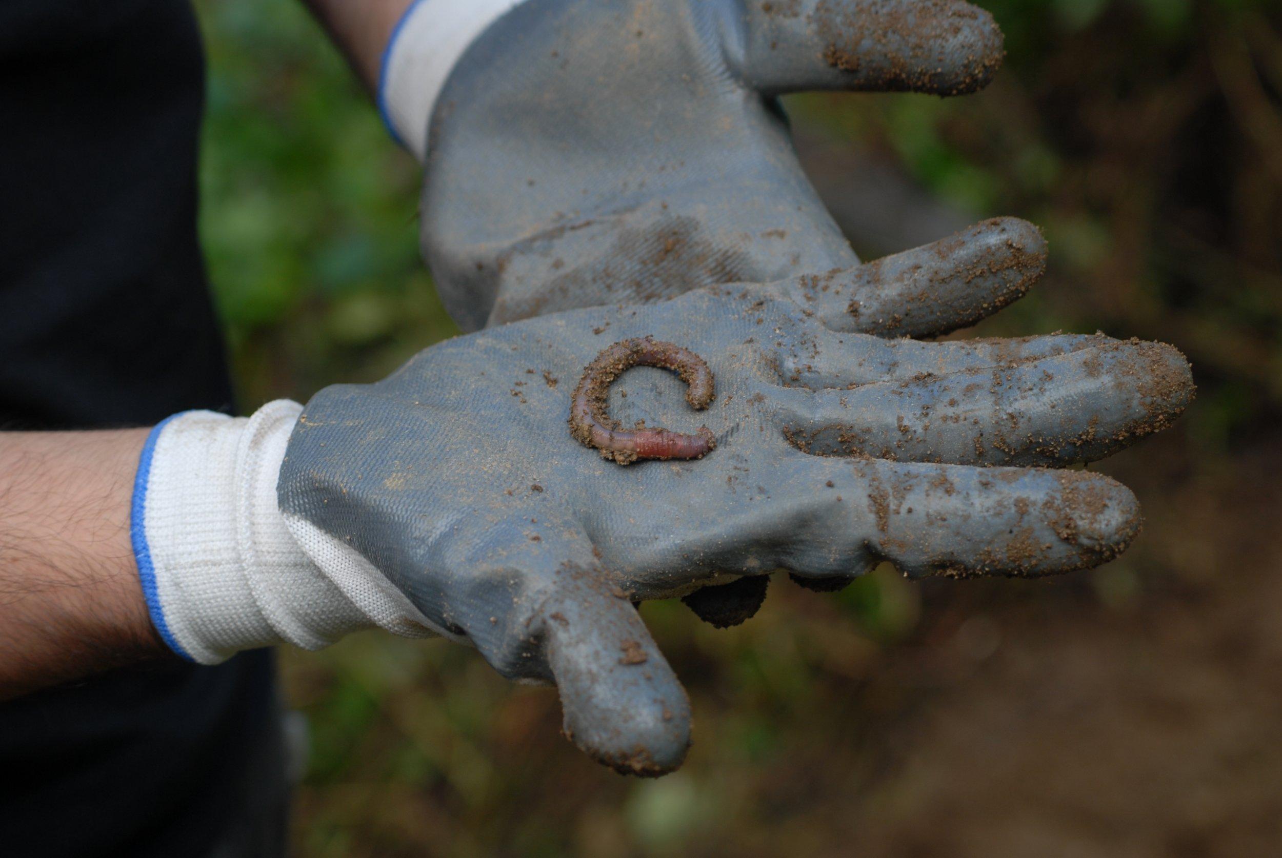 Volcano-worm