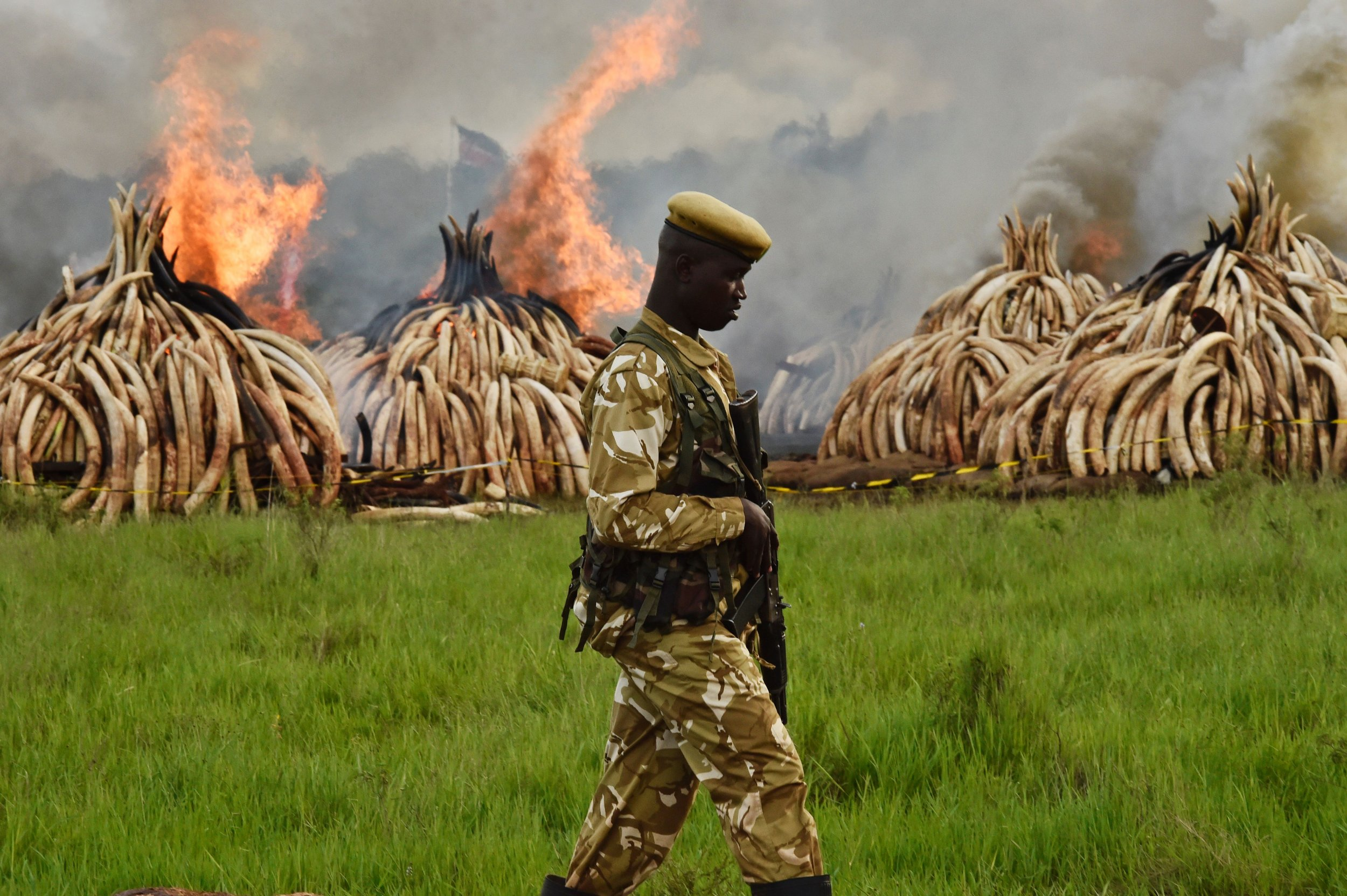 Kenya Ivory Fire