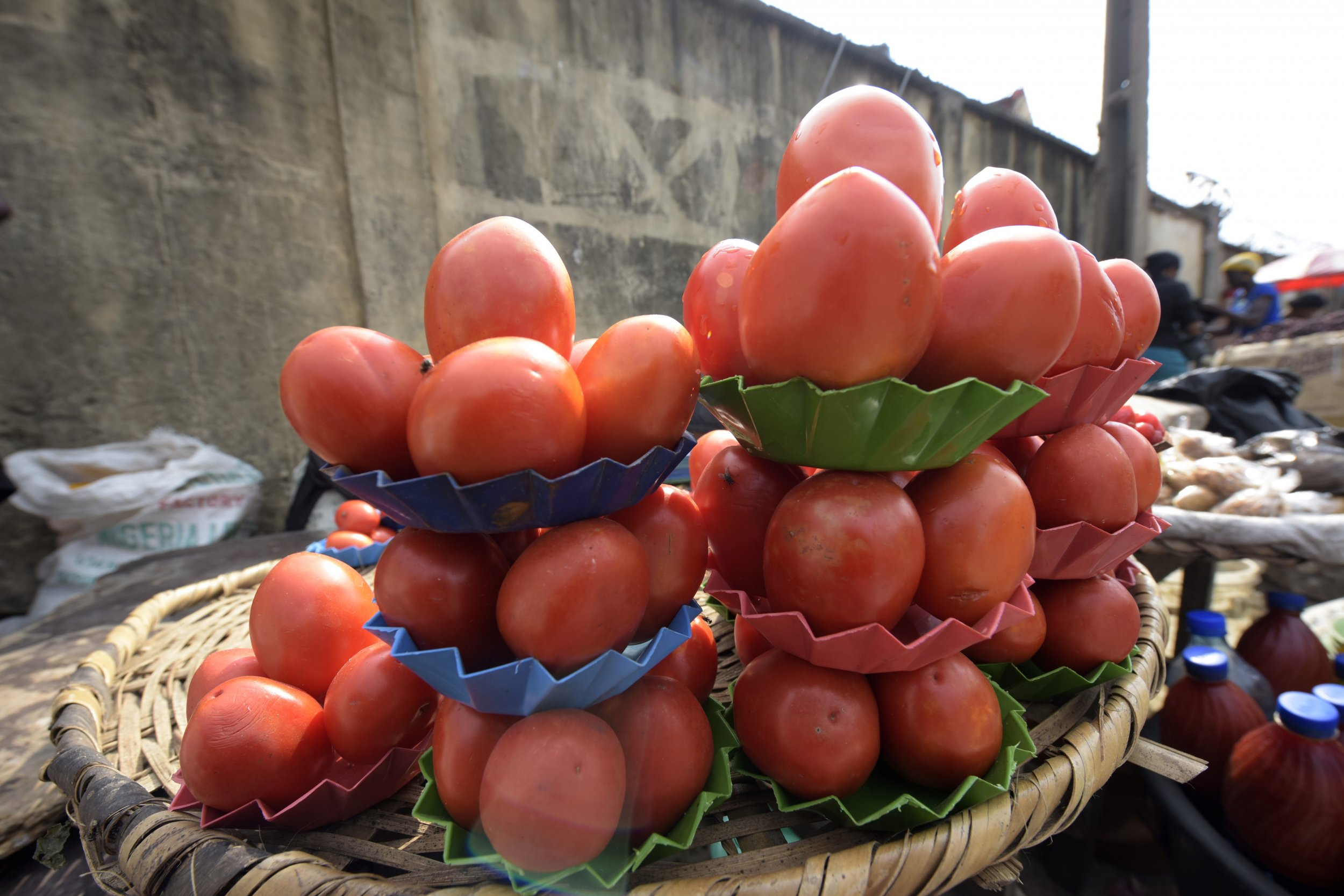 Nigeria tomatoes for sale