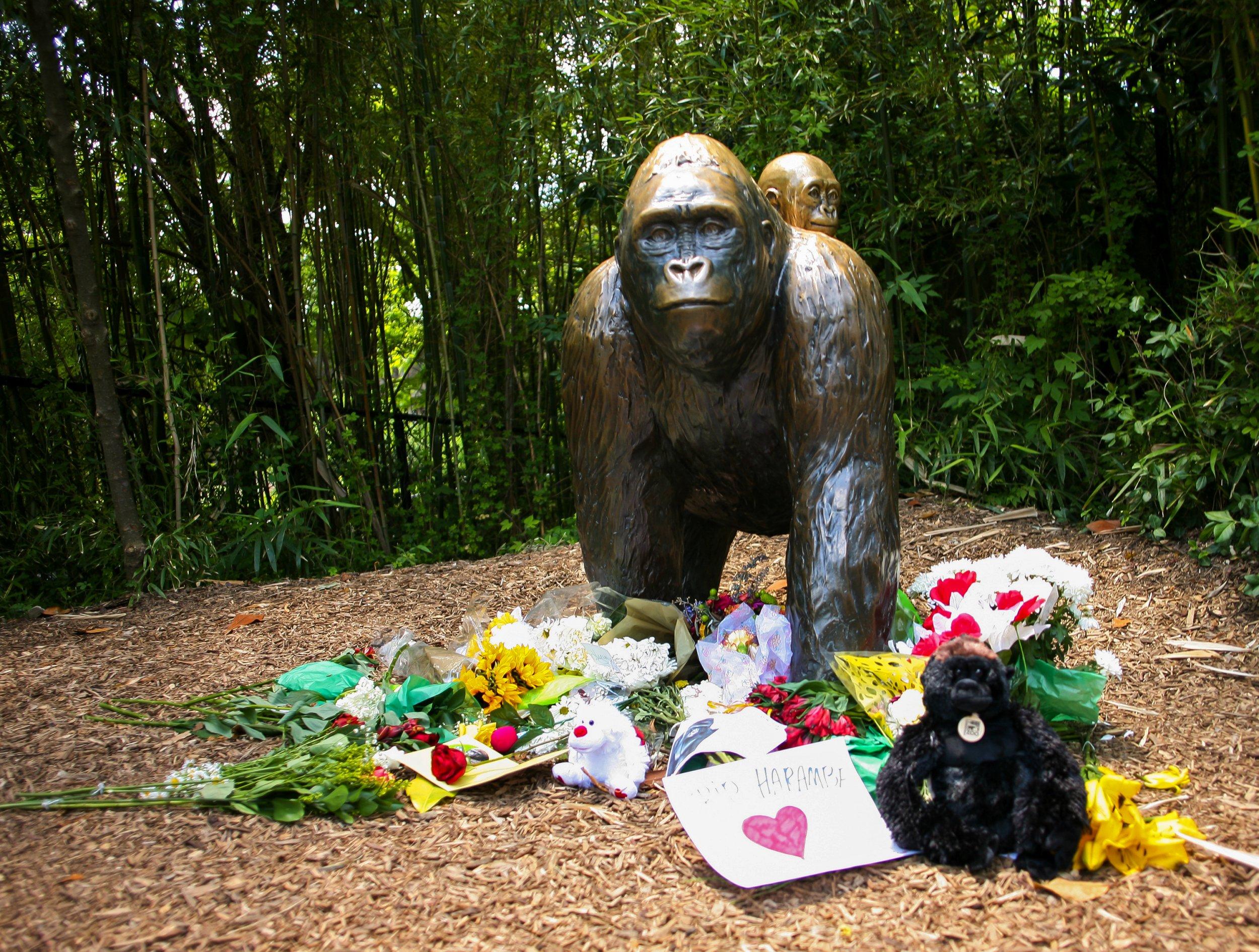 0606_gorilla