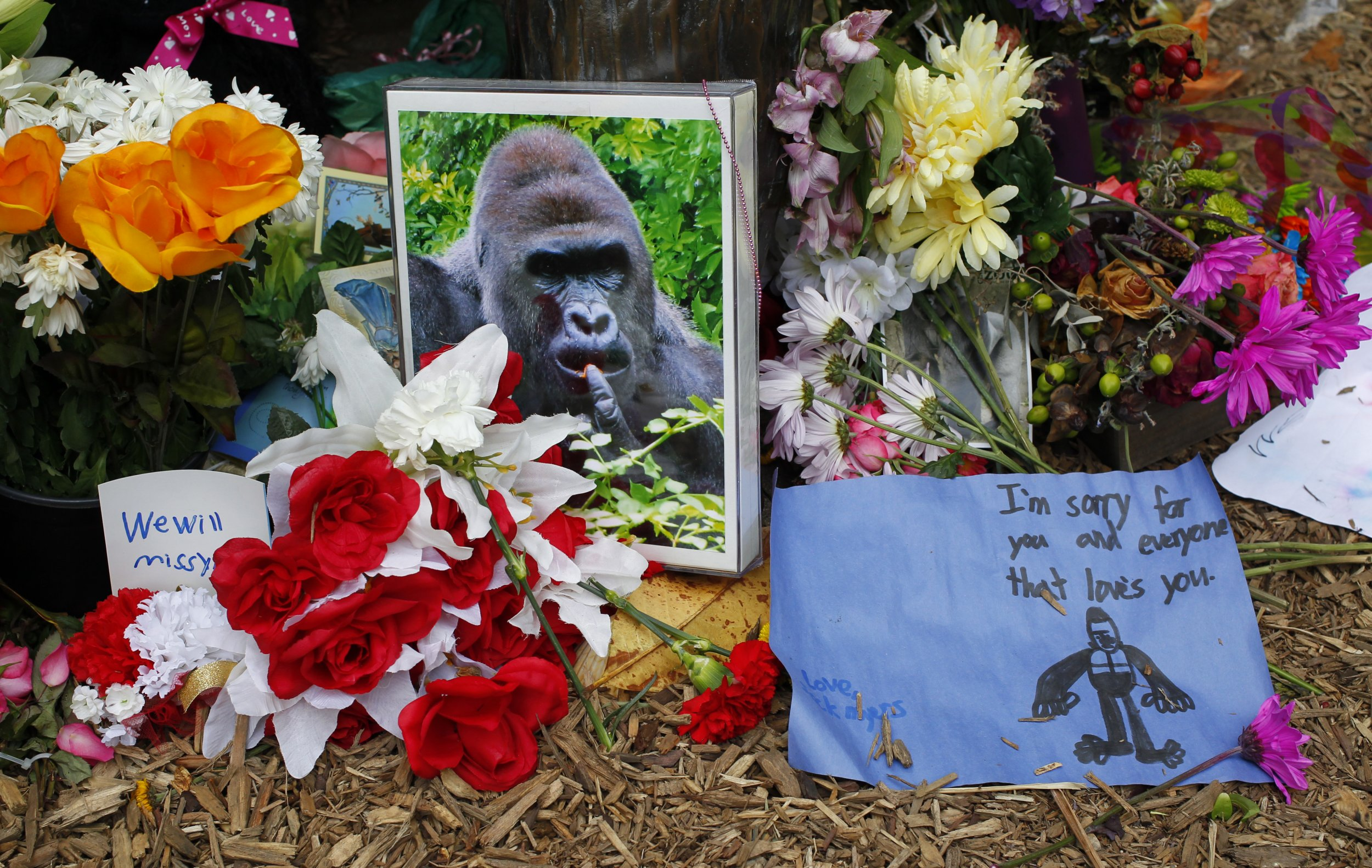 Tributes to Harambe the gorilla.