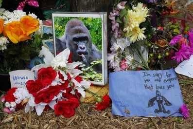 Tributes to Harambe the gorilla.