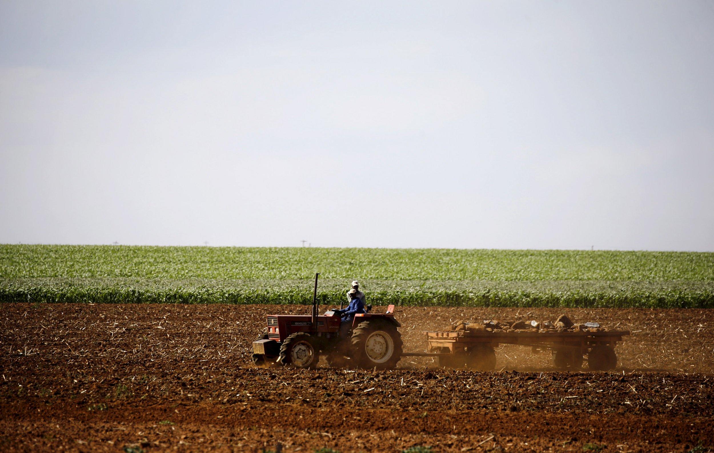 South African maize farmer