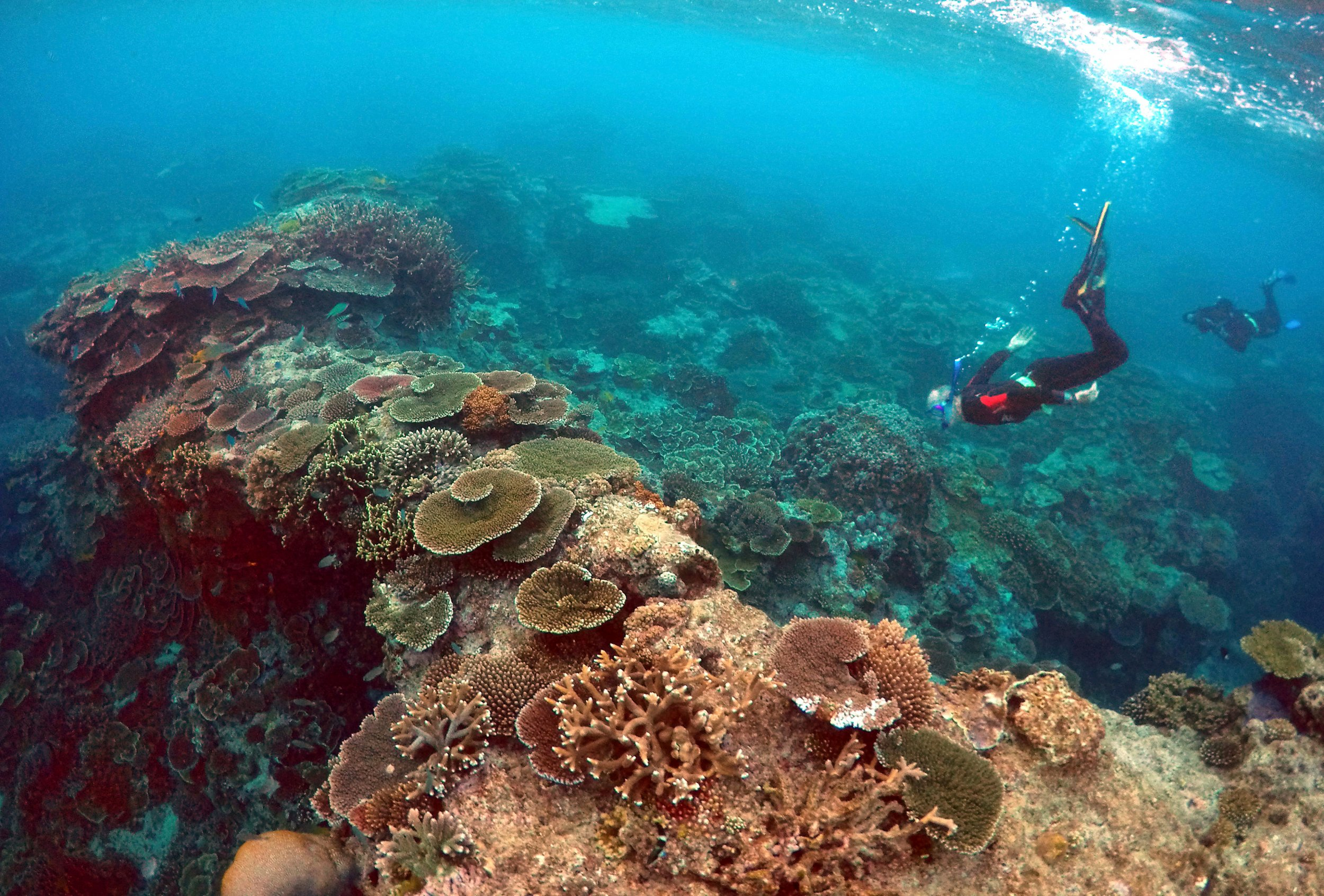 Coral Reef Bleaching Event Climate Change
