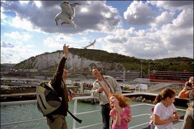 Dover seagulls