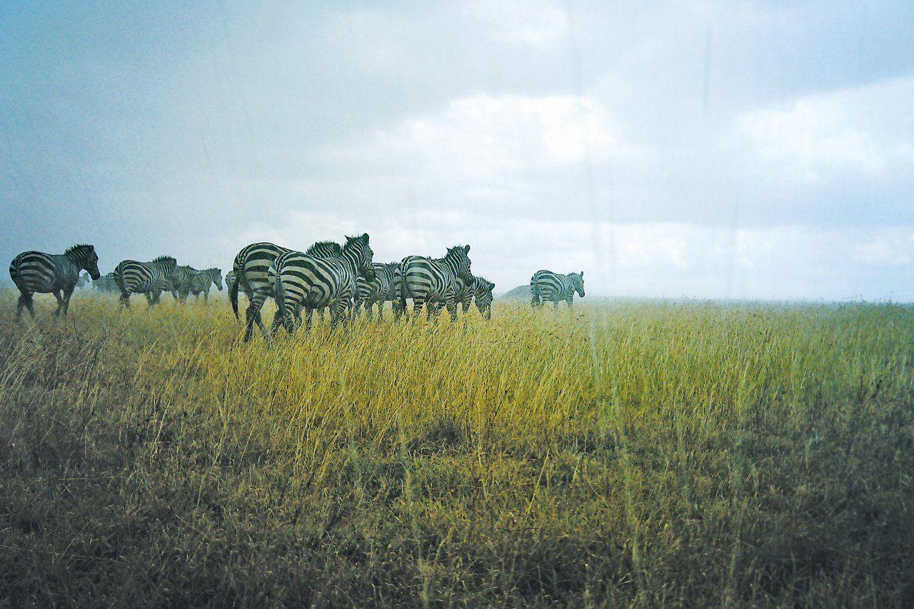 Snapshot Serengeti
