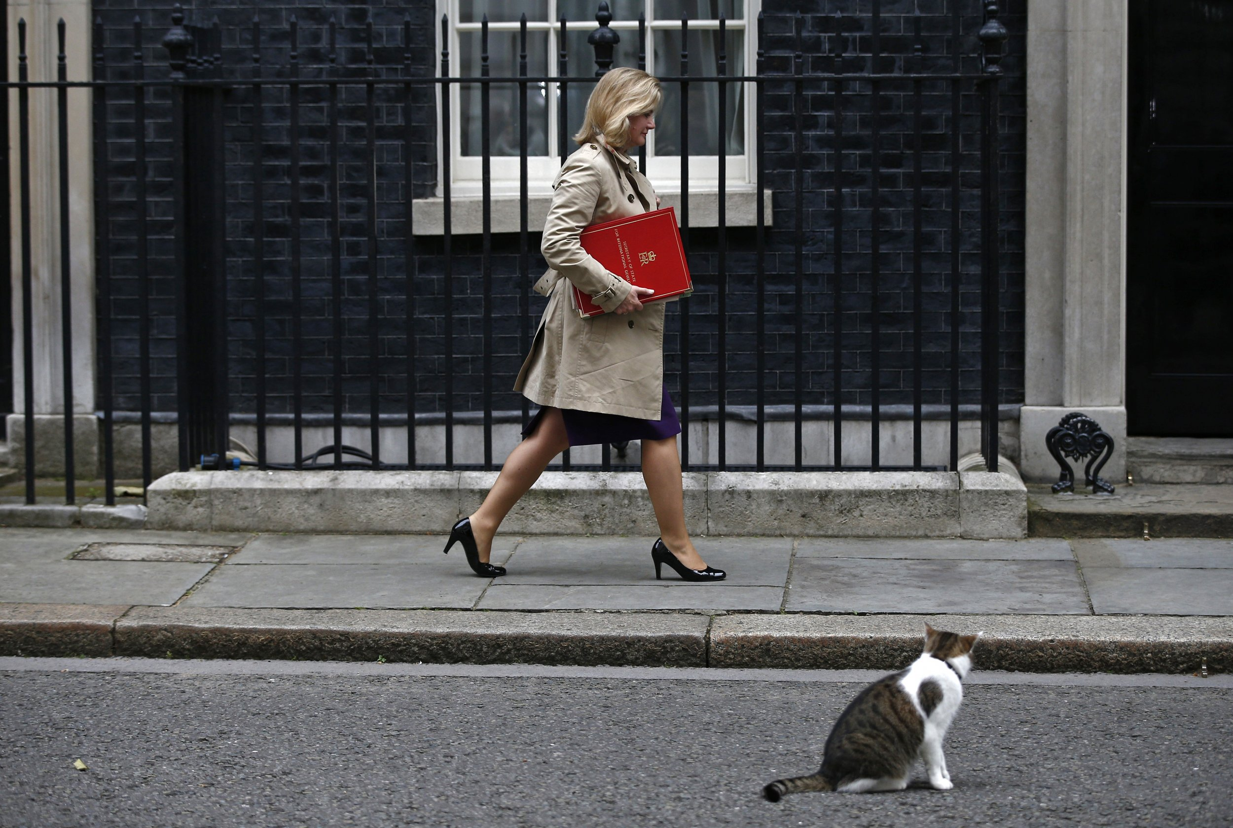 Larry the Cat Remains in Downing Street, Despite Cameron's Departure