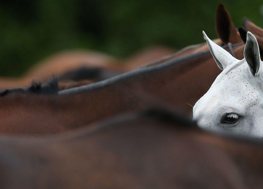 horse whisperer HABIT university of Nottingham