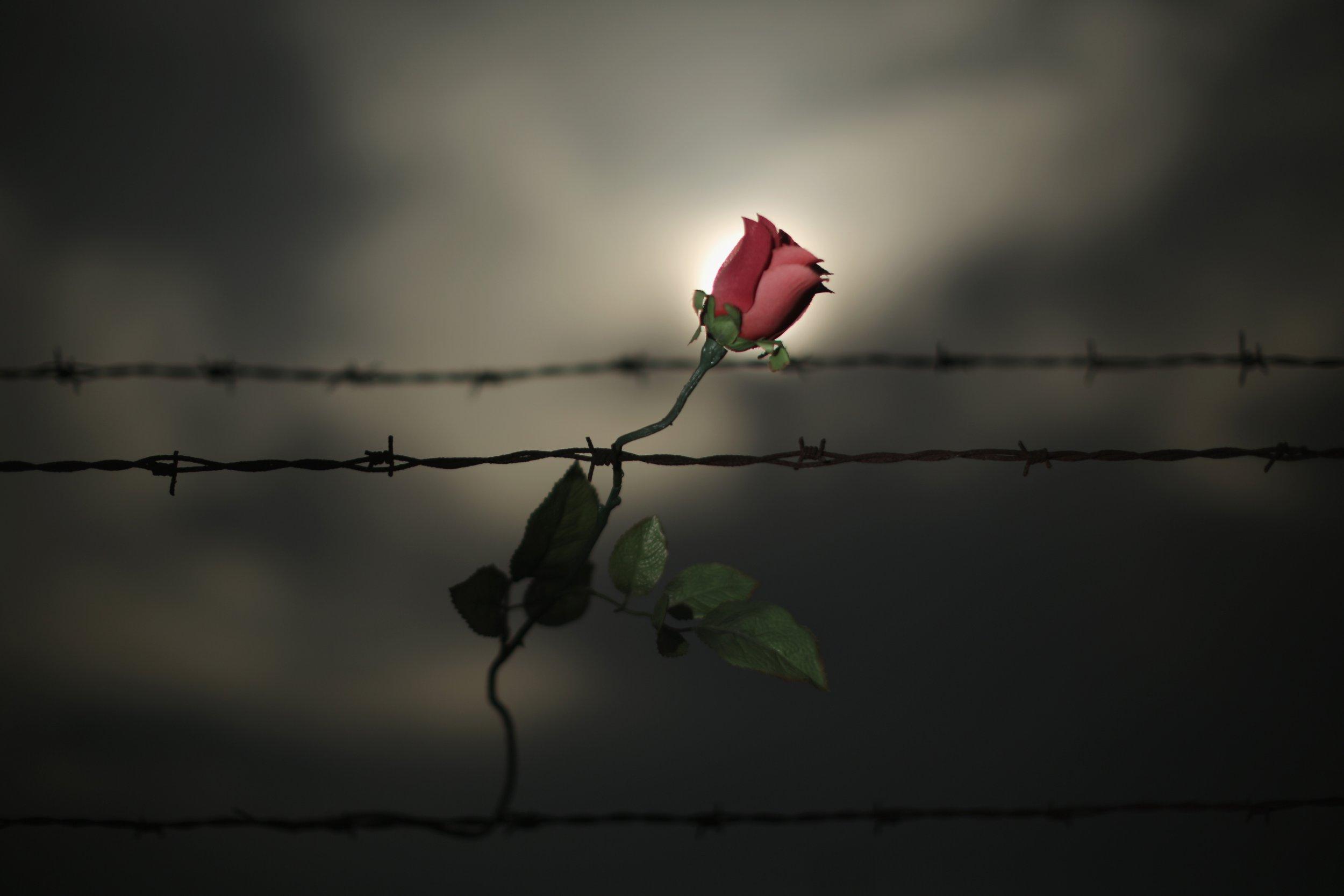 Holocaust Restitution Victims Survivors