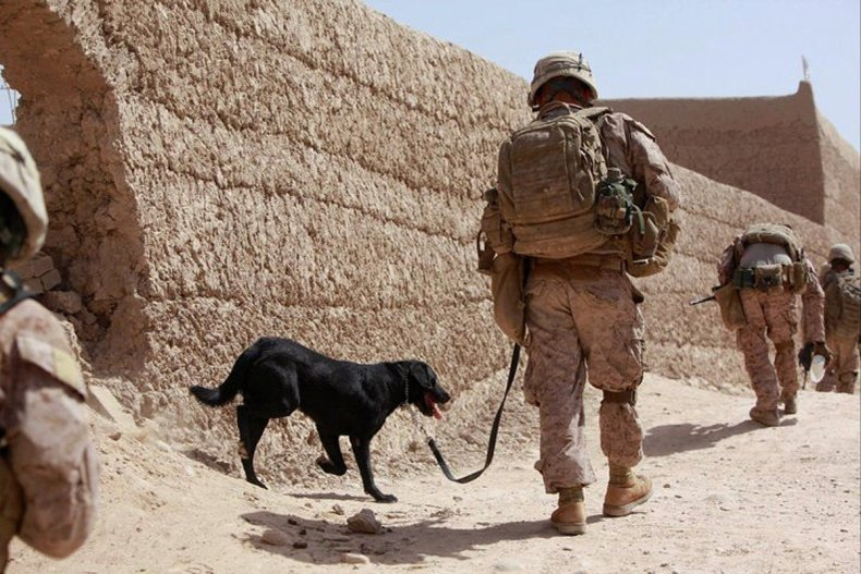 Matthew O'Hara and his dog, Rocky, in Afghanistan. Weston took on the White House to reunite them.