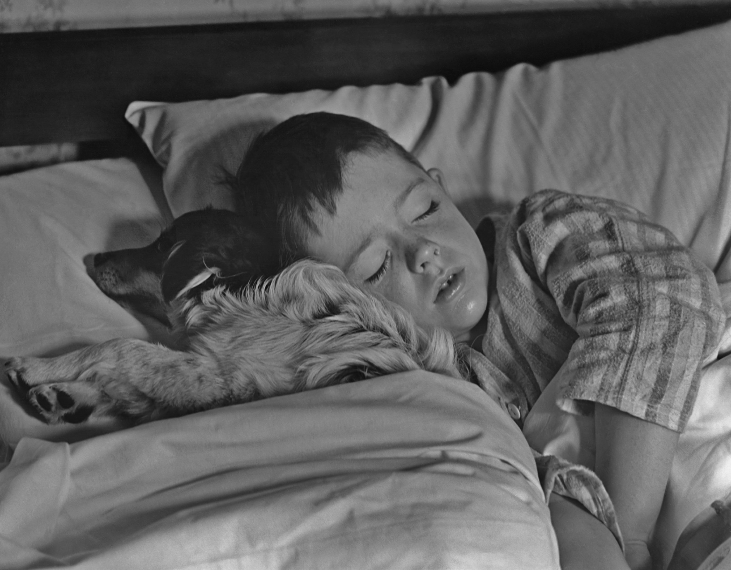 Boy asleep with dog