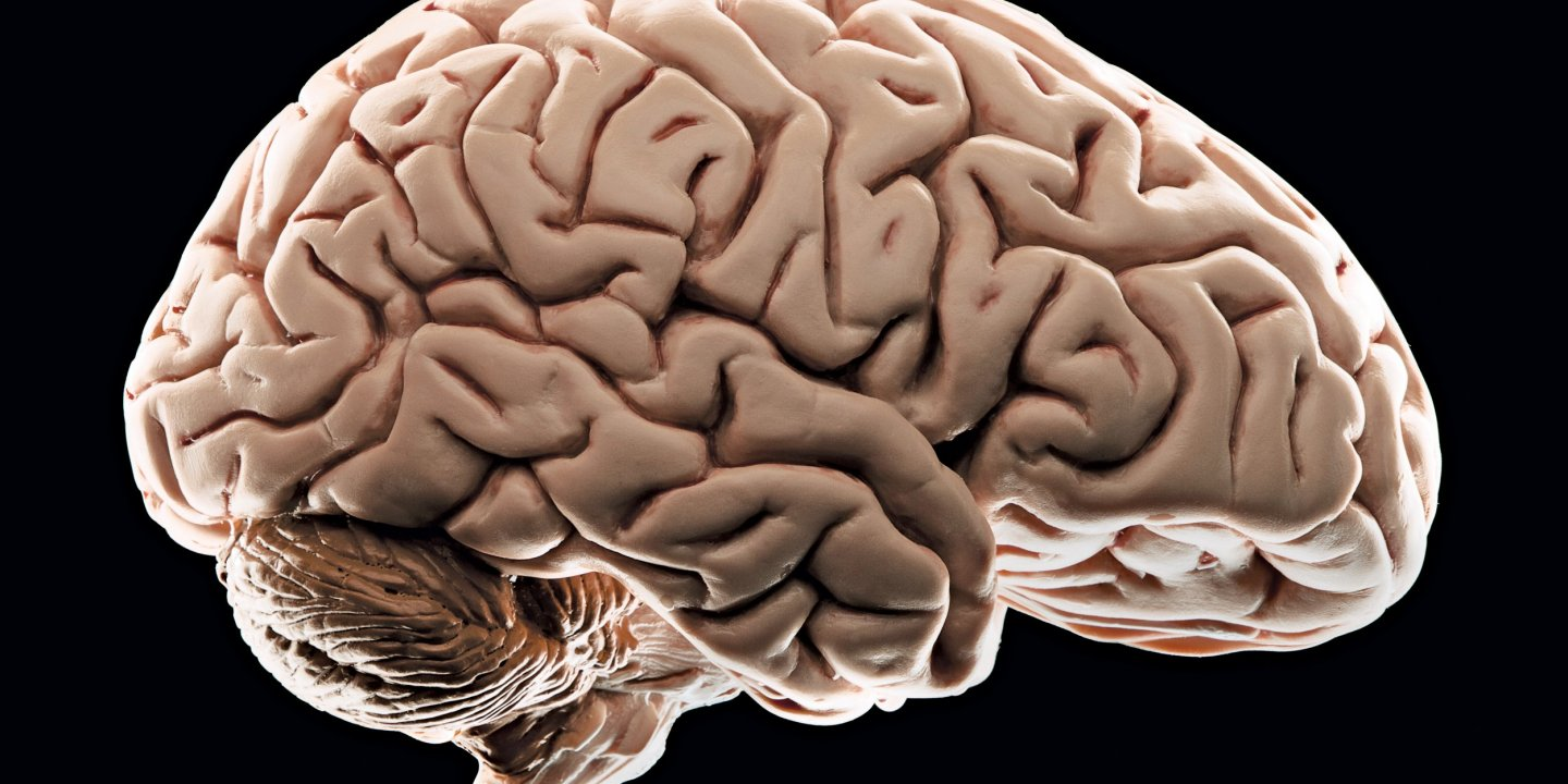 Social Stress Brain Circuitry Fails To >> How Poverty Affects The Brain