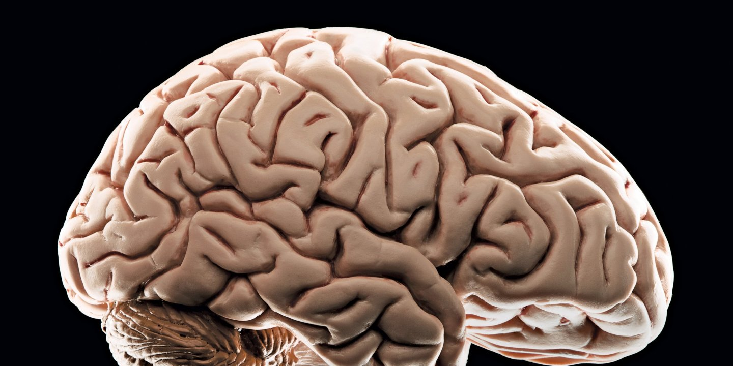 Modern Parenting May Hinder Brain >> How Poverty Affects The Brain