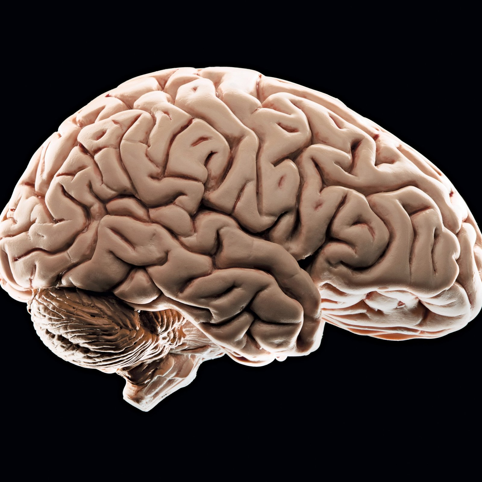 What Poverty Does To Young Brain >> How Poverty Affects The Brain