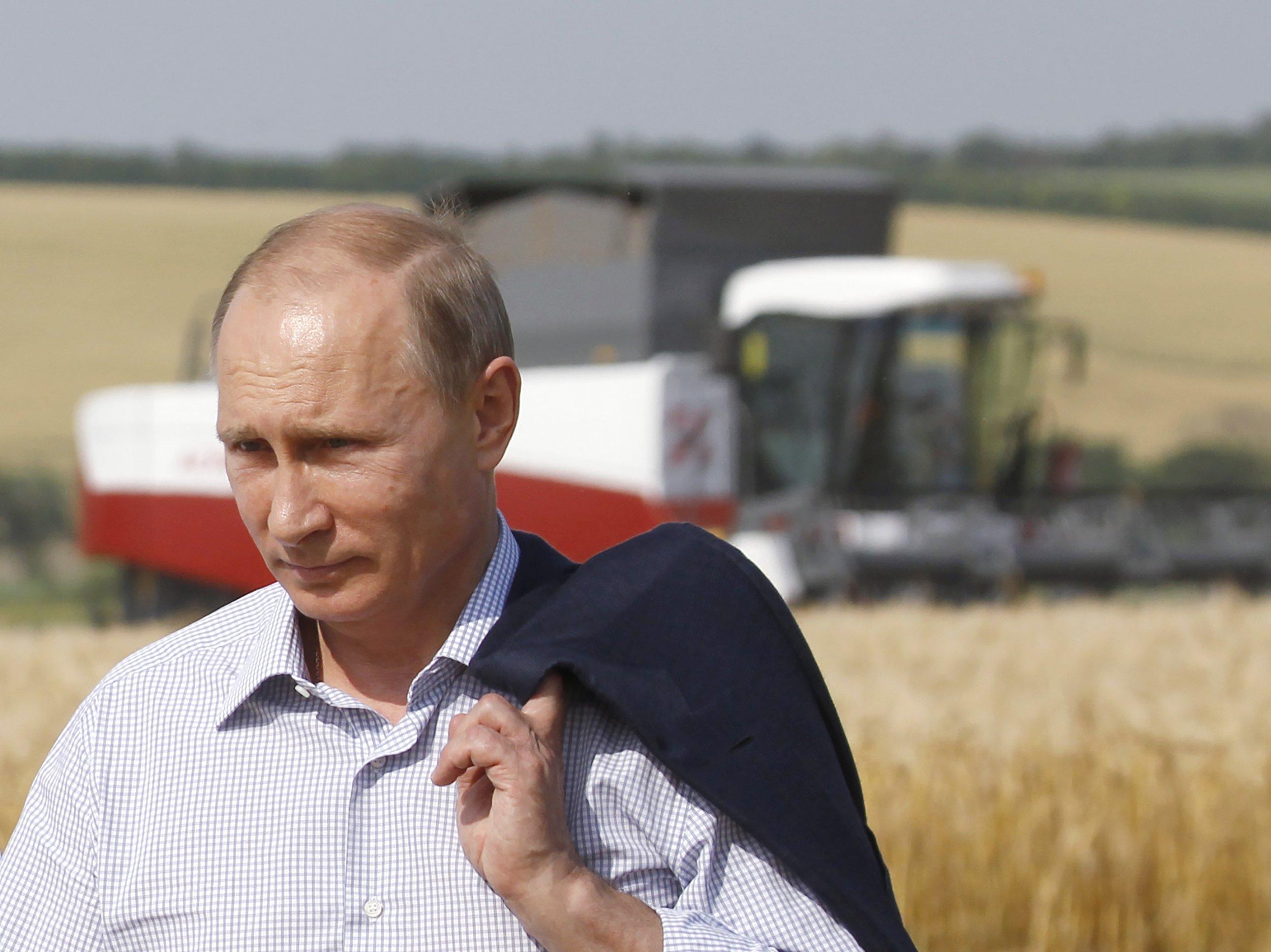 Putin in a barley field