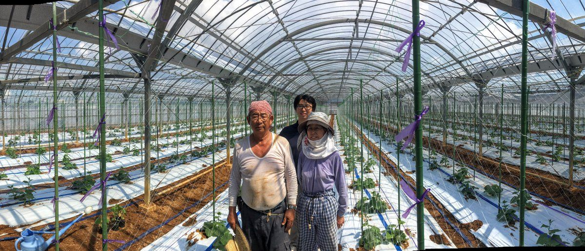 artificial intelligence japan cucumber farm AI