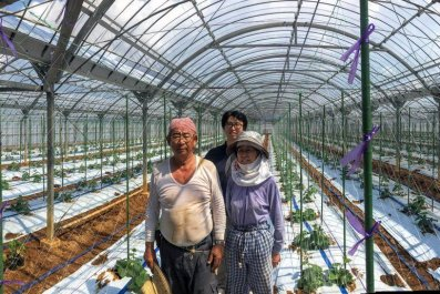 artificial intelligence japan cucumber farm AI
