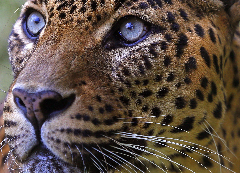 09_07_Trump_Leopard_01
